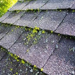 Roof-Pro-roof-algae