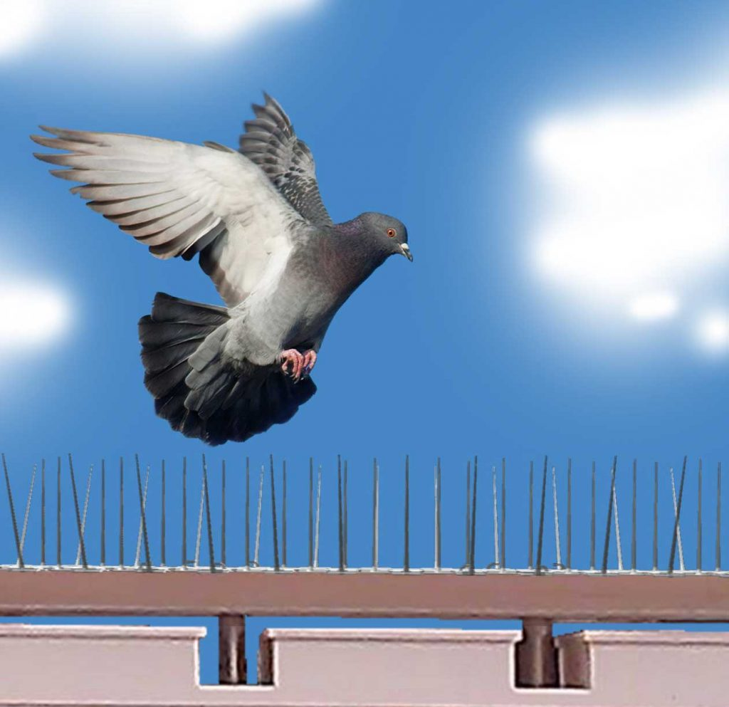 Bird Protection Roof Pro Can Rid You From Bird Infestation
